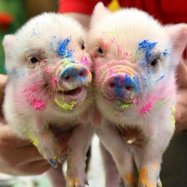 ☺The Colors Running, Little Pigs, Minis Pigs, Baby Pigs, Pets Pigs, Teacups Pigs, Painting, Piglet, Animal