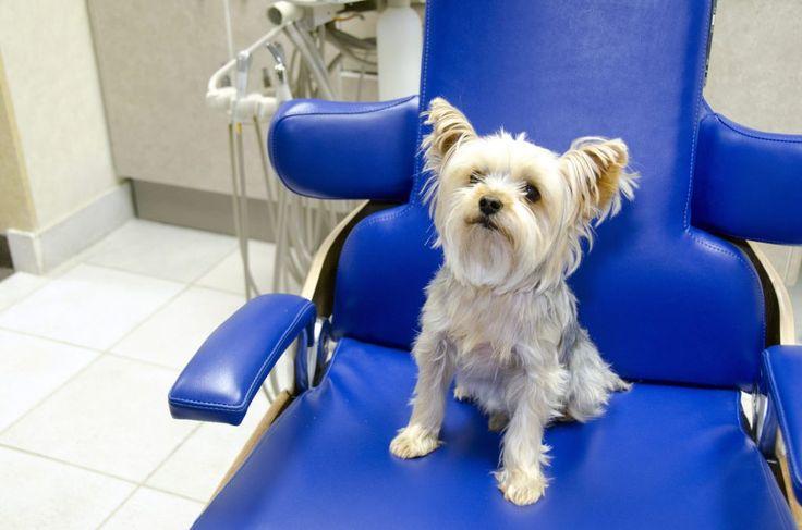 Open Wide: The Pet Dental Exam Decoded   Stone Ridge Veterinary Medical Center