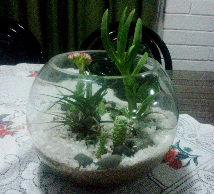 Terrario suculentas y cactus
