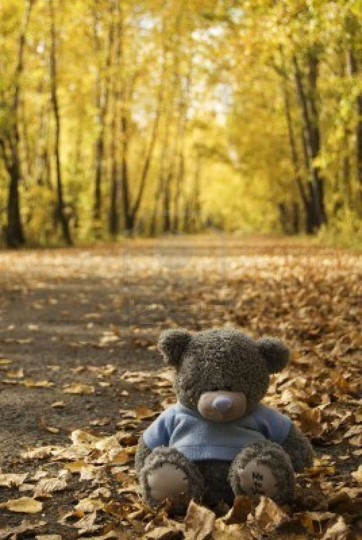 awww.  sad little teddybear sitting in the autumn leaves