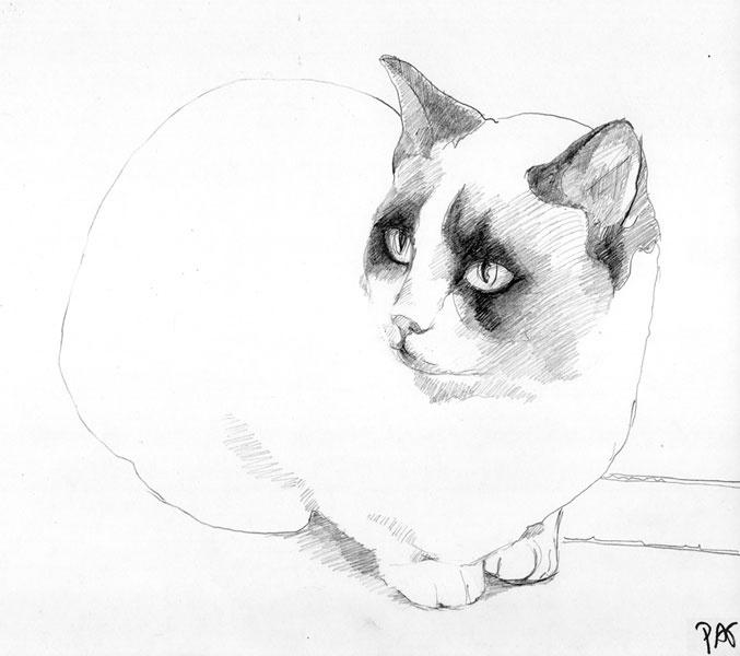 black and white cat03 - 2013