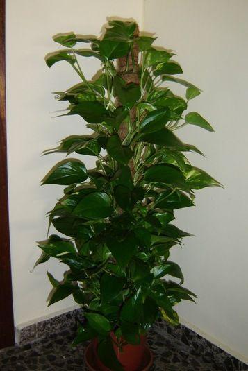Descubre el mejor truco para que tus plantas recuperen su belleza natural en unos cuantos días.