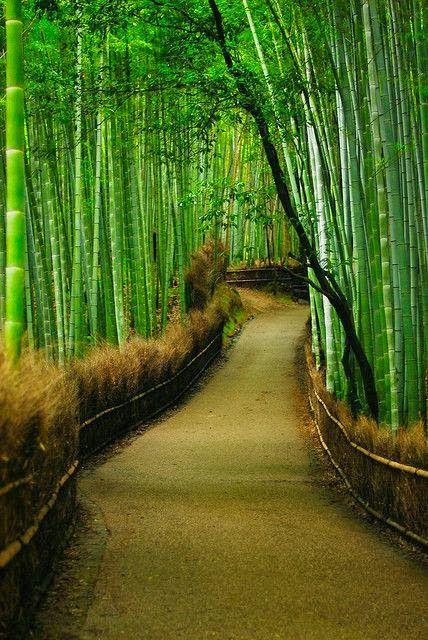 Tenryu-ji bamboo forest - Kyoto, Japan