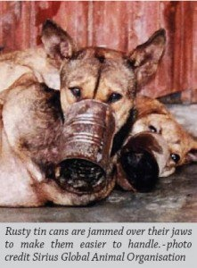 "Dogs are ""muzzled"" with rusty tin cans - their front legs are forced behind their backs & bound up tightly - then they wait to die."