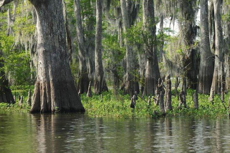 Atchafalaya Swamp, Λουιζιάνα