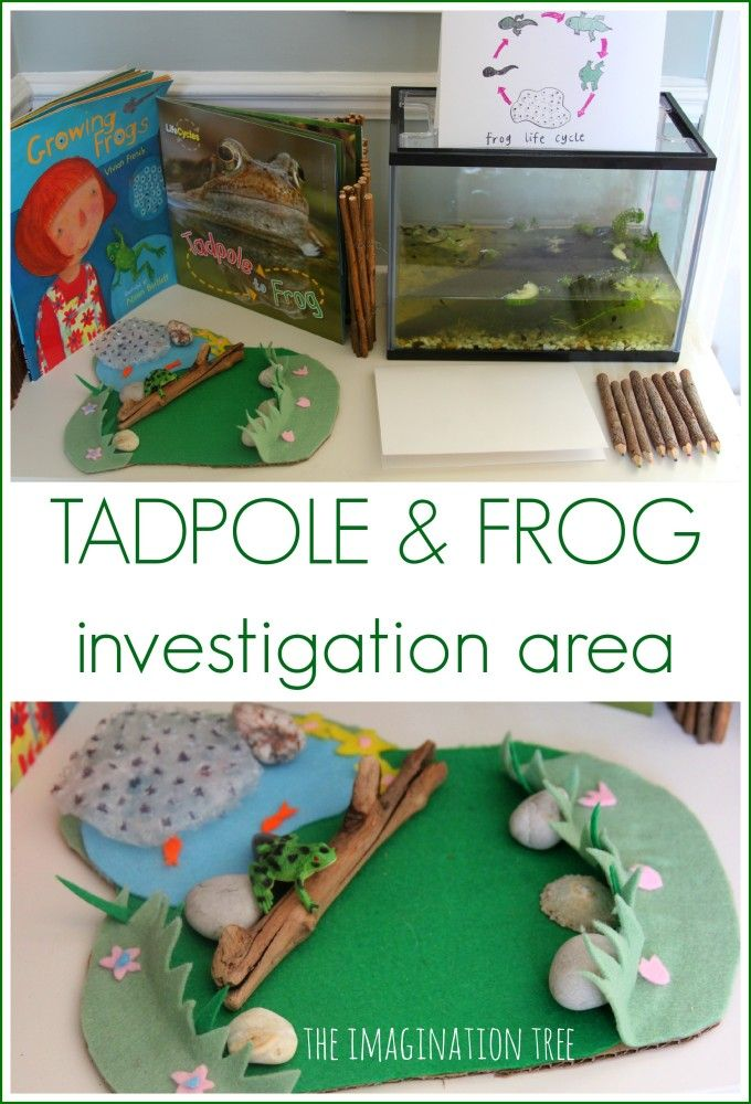 Tadpole and frog investigation and observation area. The Imagination Tree is one of my favorite blogs.