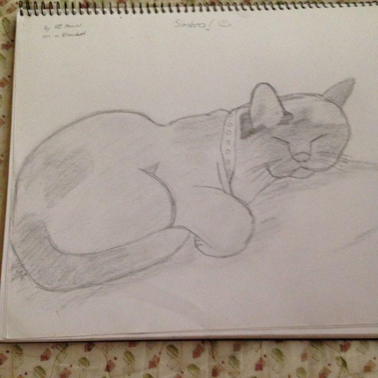 My cat (mine)