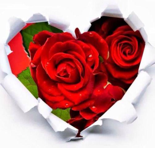 Ms de 25 ideas increbles sobre Rosas rojas en Pinterest  Rosas