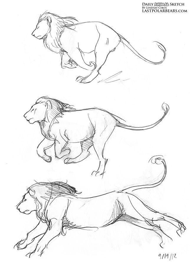 drawing cat lion animal drawings running sketch daily anatomy line animals draw sketches zoo animales easy coloring step visitar bocetos