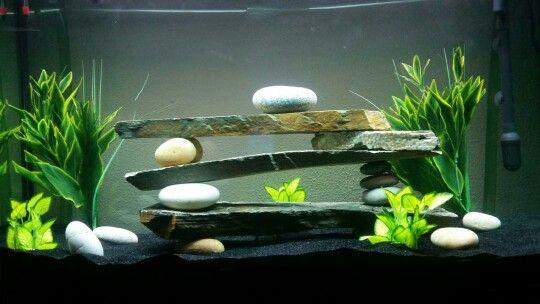 Love the modern fish tank!