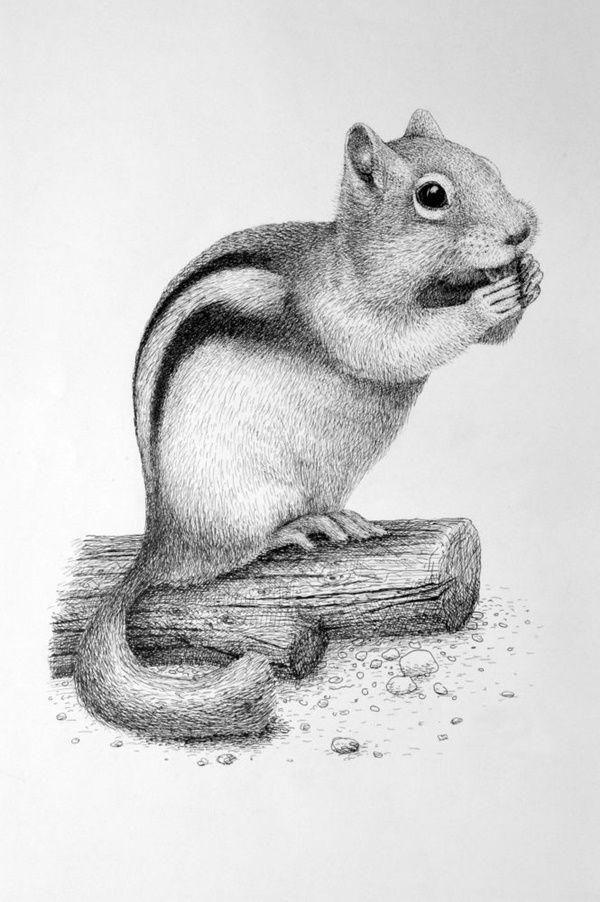 Animal Shading : animal, shading, Simple, Pencil, Drawings, Animals, Hippy, Animal, Sketches,, Realistic, Drawings,
