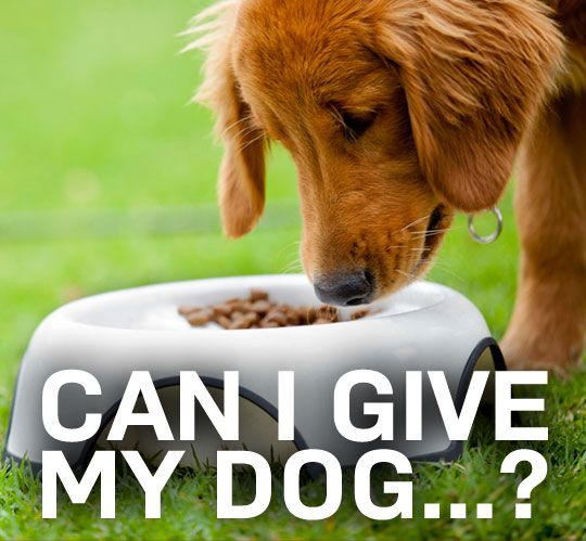 What you can and canno't give your dog. Every dog owner needs to read this!