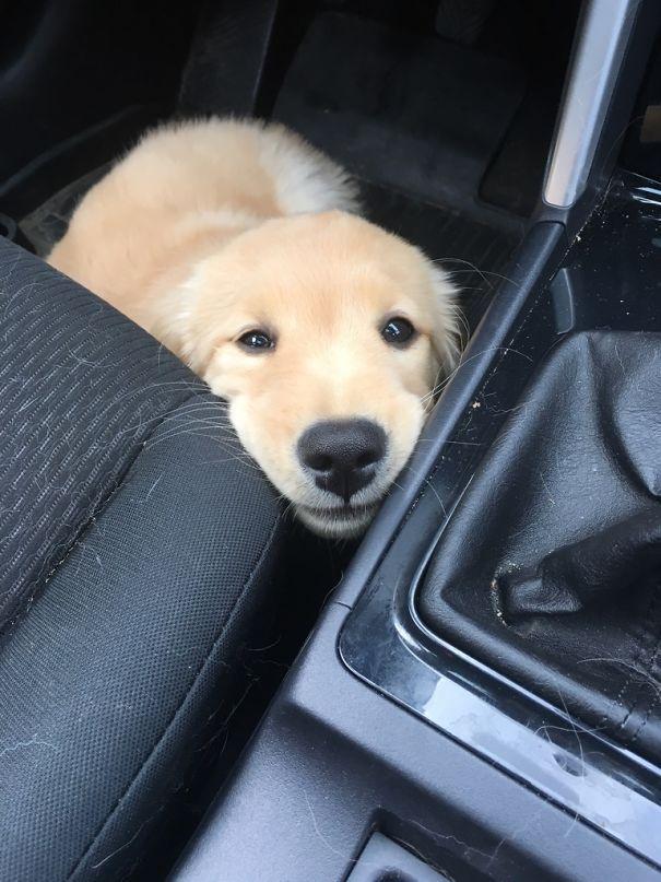 Ellie Is A Pretty Happy Puppy