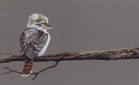 Artwork Kookaburra 4. Limited Edition 25 fine art by DaisyClaridge