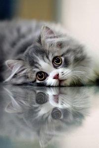 .Beautiful Cat, Kitty Cat, Cat Eye, Pets, Adorable, Pretty Kitty, Kittens, Big Eye, Animal