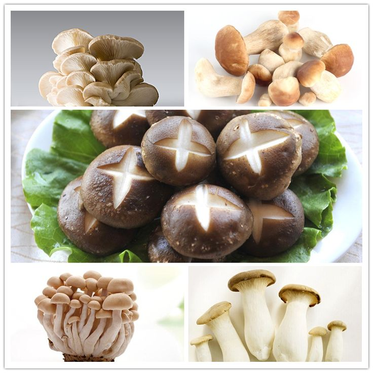 100pcs/bag Mushroom Seeds Funny Succlent Plant Edible Health Vegetable 25 Kinds Mushroom Seeds For Happy Farm Free Shipping #>=#>=#>=#>=#> Click on the pin to check out discount price, color, size, shipping, etc. Save and like it!