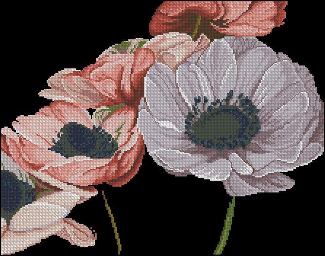 Hearts of Anemones