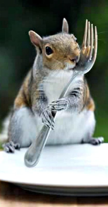 2352 best Squirrels, Chipmunks, Raccoons images on Pinterest ...