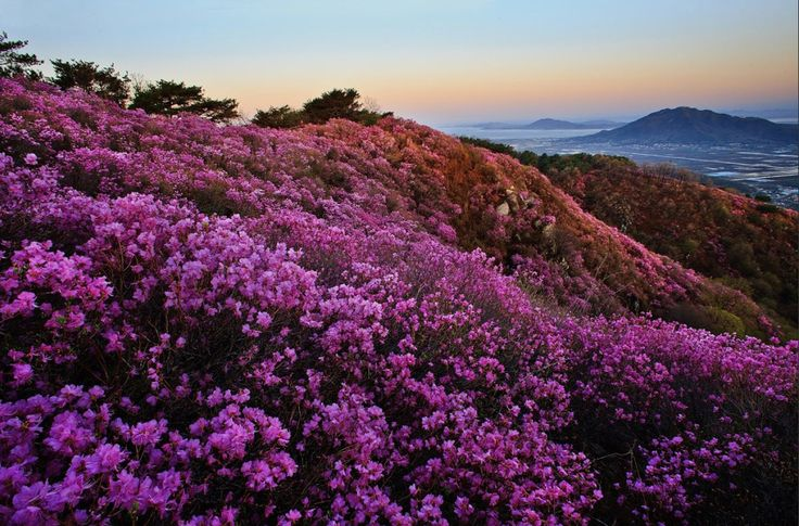 best things to do in korea