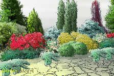 Kompozycja z iglaków - GardenPuzzle - projektowanie ogrodów w przeglądarce