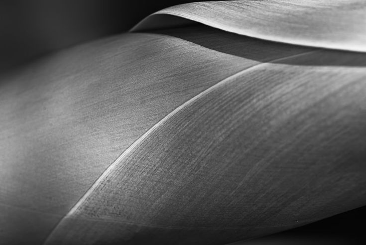 Lines of life by Loscar