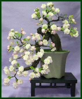 where to buy preserved real life fake Artificial Bonsai Trees for sale «…