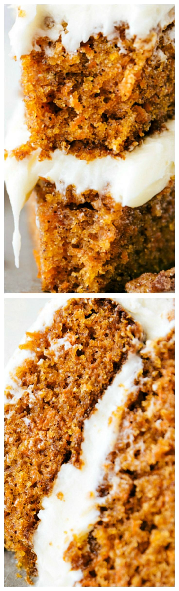 Candied Pecan Carrot Cake ~ The best carrot cake ever -- super moist, tender, and perfectly spiced with an incredible and soft cream cheese frosting. The cake is coated in candied pecans giving it an extra delicious (and pretty) touch!