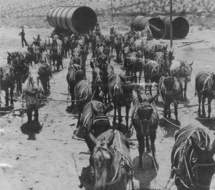 (1912)* - Transportation was largely by mule power when the Los Angeles Aqueduct was under construction. This photo shows a 52-mule team hauling sections of aqueduct pipe to the Jawbone Siphon. When completed in 1913, the Los Angeles Aqueduct was considered to be a great engineering accomplishment only second to the Panama Canal. A century later, it continues to be a marvel in modern engineering.