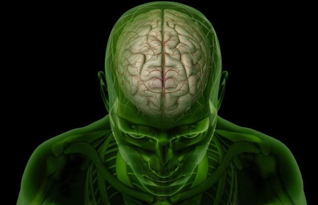 Learn the Basic Structures of Brain Anatomy: Introduction to the Brain - The Cerebral Cortex