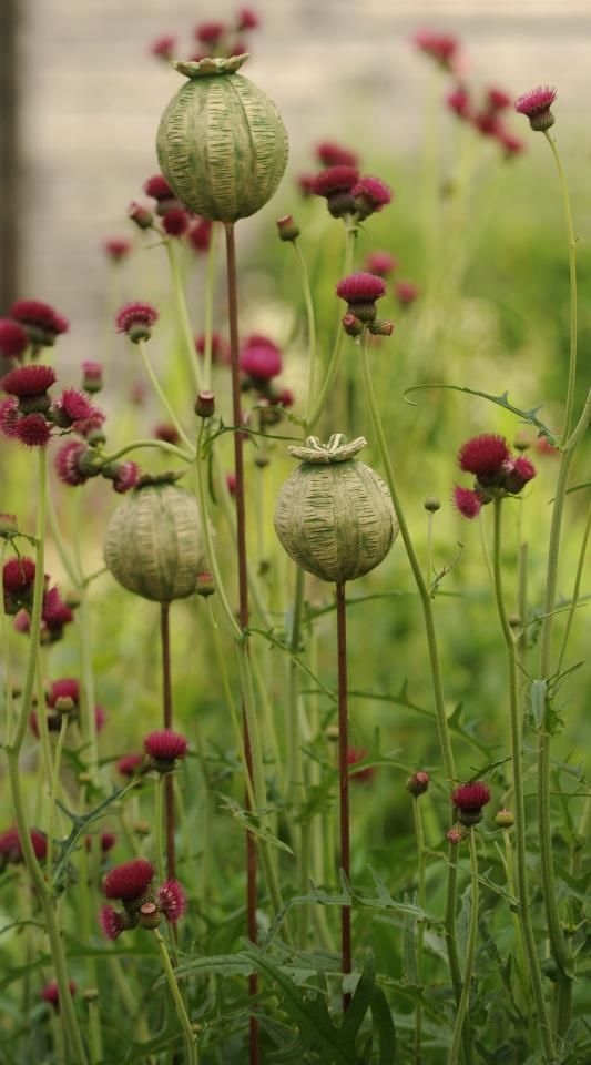 Ceramic poppy seed pods grouped in a garden