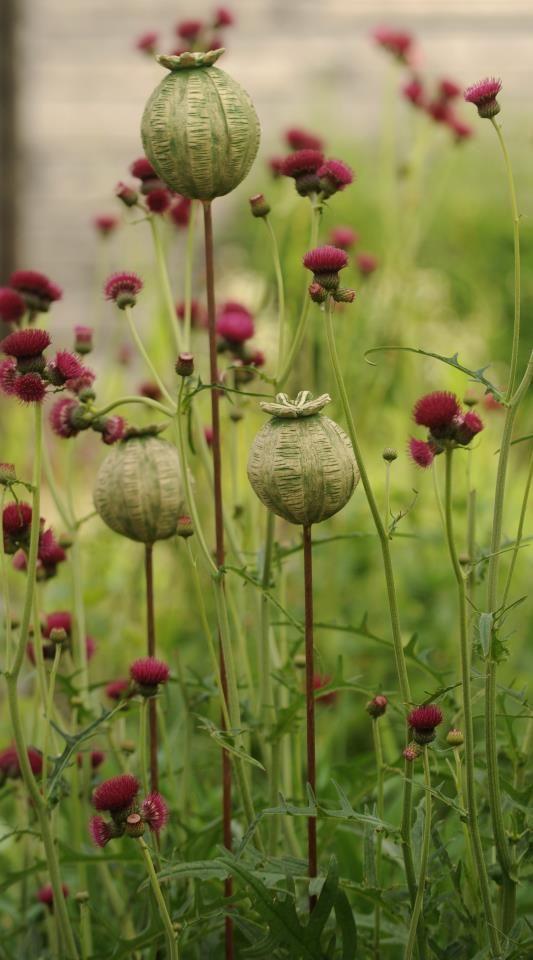 Ceramic poppy seed pods grouped in a garden
