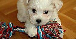 Cuidados en el segundo mes del cachorro, ¡esenciales para su correcto desarrollo!