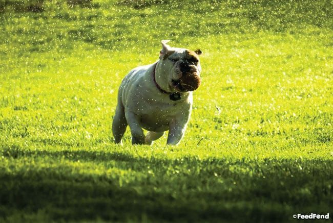 Training Dog In Electric Fence Best Invisible Dog Fences Guide