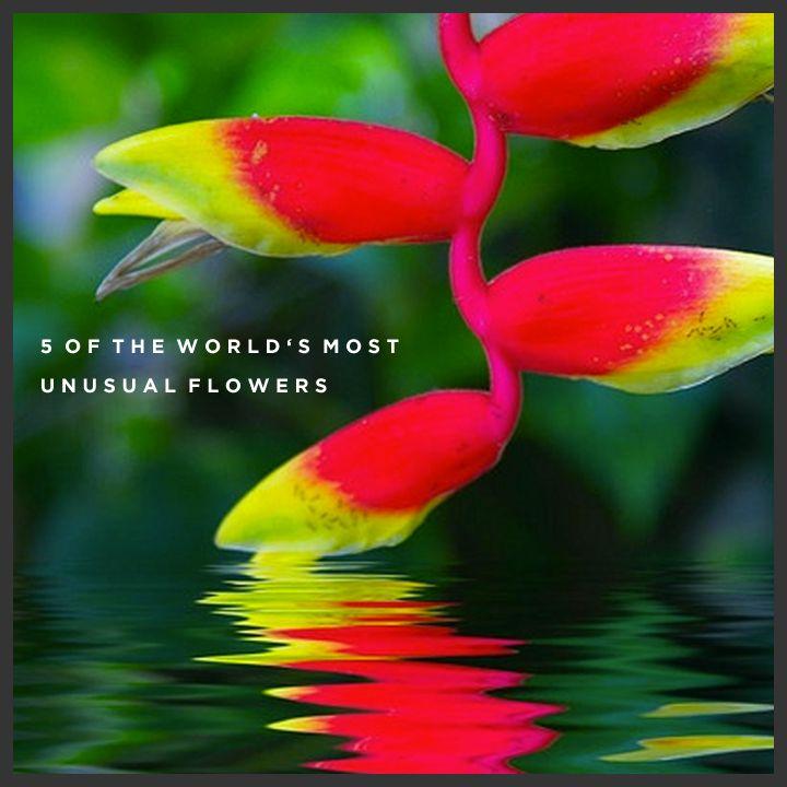 http://www.appleyardflowers.com/blog/5-worlds-unusual-flowers/ - Read about 5 of the most unusual flowers picked by Appleyard London.