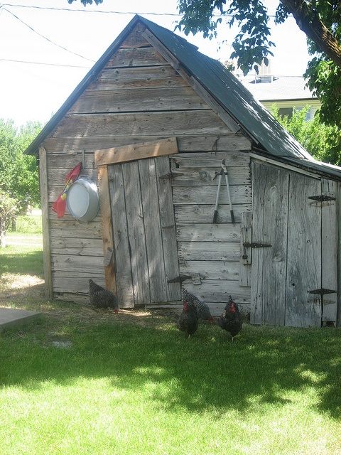 chicken house - Garden Sheds Galore
