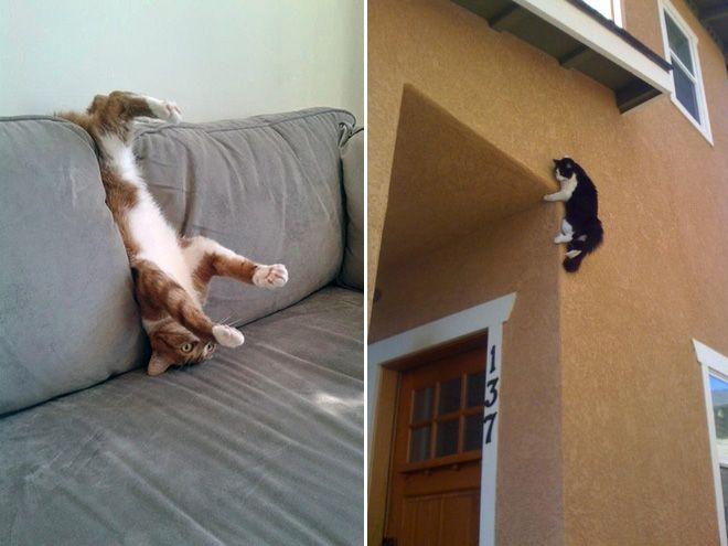 EPIC GALERIE  30 photos qui prouvent que les chats sont des ninjas !