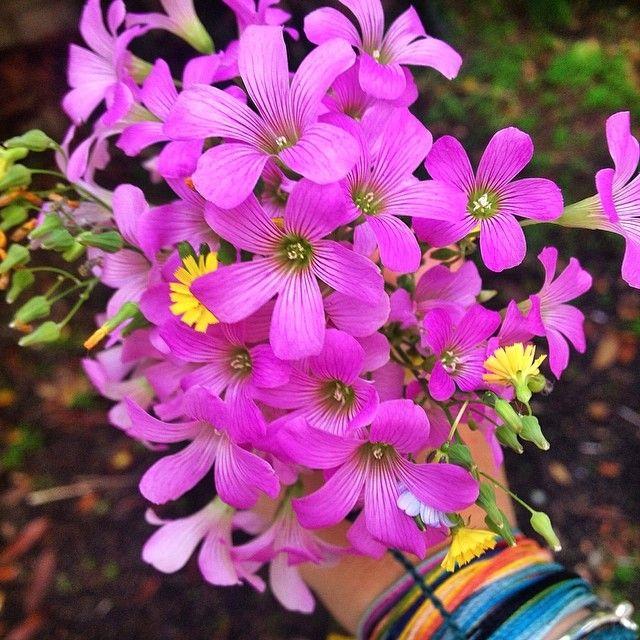 Enveloppement Multi-usure - Violette Jungle Sauvage Floral Par Vida Vida wOehuteDRG