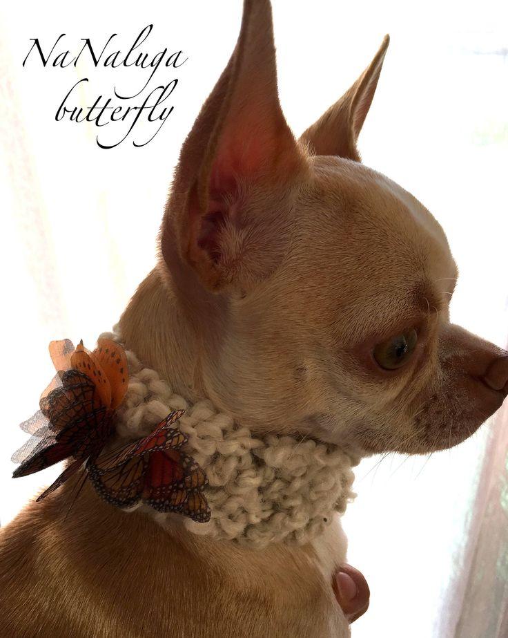 NaNaluga Scarf - Cowl - Soft Wool - Little Puppy Neckband - Neck Warmer - Neckband Butterfly Monarca
