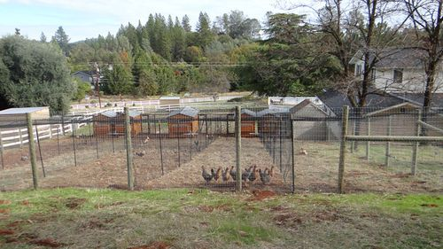 ADVICE NEEDED: Building a chicken run that doesn't look - well, trashy.