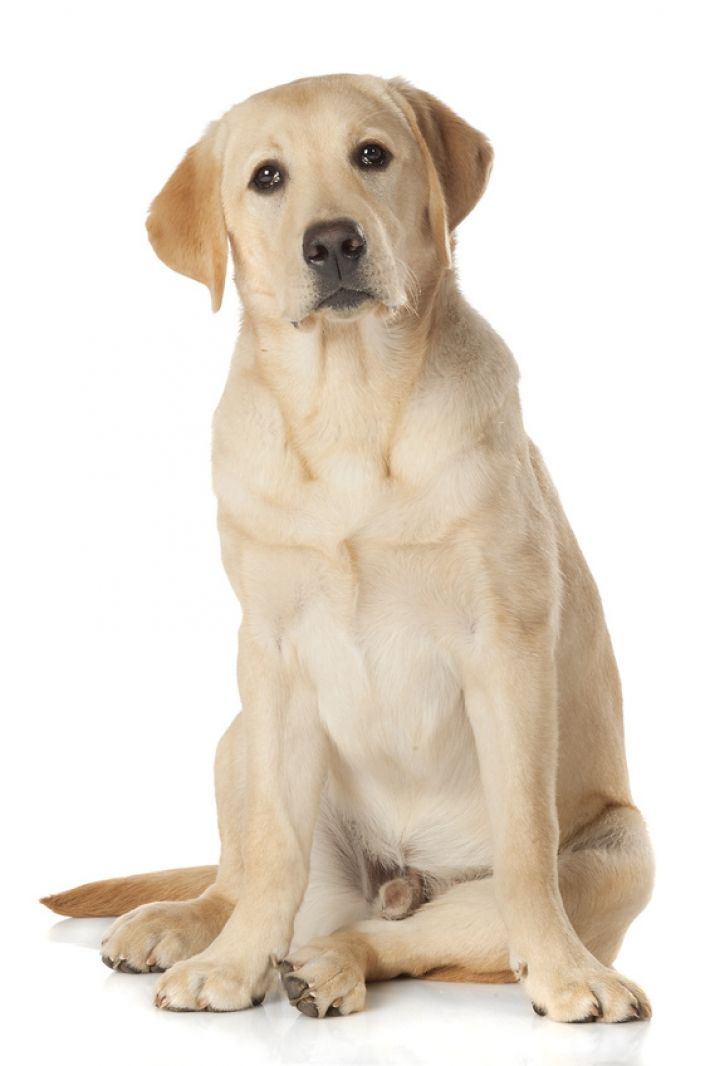 les 25 meilleures id es de la cat gorie races de chiens de taille moyenne sur pinterest chiens. Black Bedroom Furniture Sets. Home Design Ideas