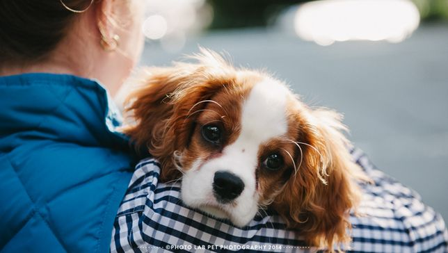 Photo Lab interviewed by Mother Nature Network: Many people who love animals and are good with a camera dream about becoming a pet photographer. Two professionals tell us about the skills it takes to succeed.