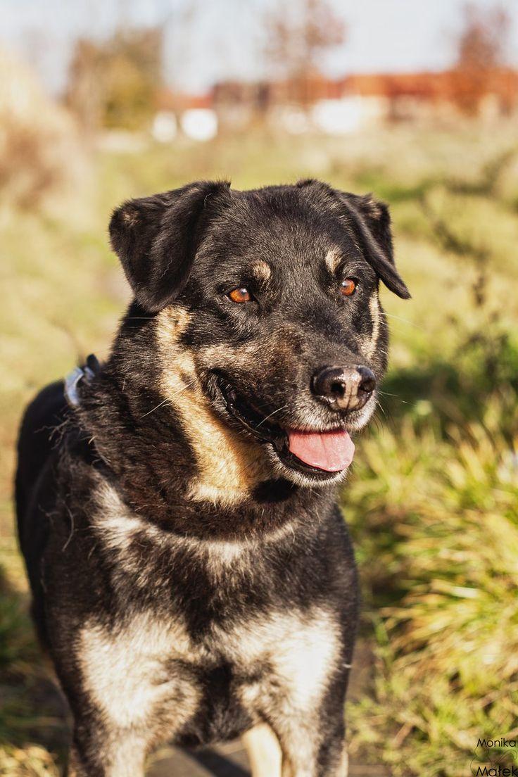 Ceder czeka na dom! www.uciechow.com/doadopcji/ceder #psy #dogs #adopt #adopcje #shelter #help #schronisko #pomoc #kundelek