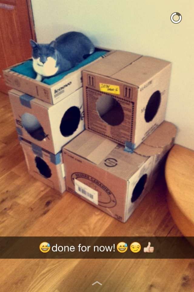 Diy Cat House Made Of Cardboard Bo
