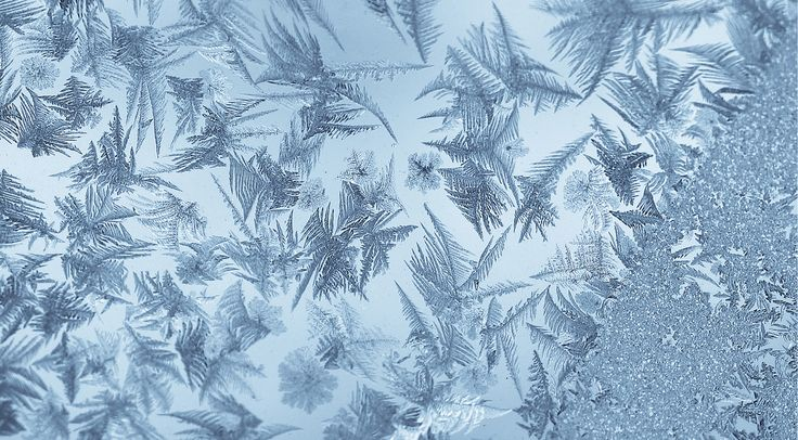 Ice Feathers | by Sharon Mollerus