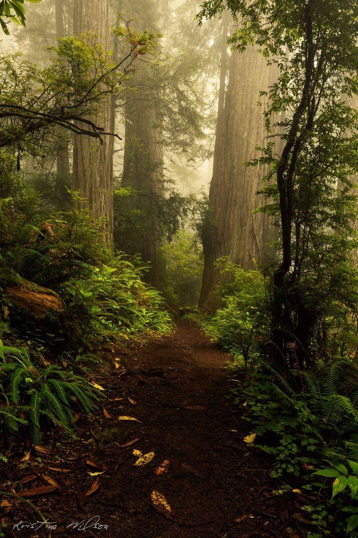 Wonderland:  #Enchanted #Forest; photo by Kristina Wilson.