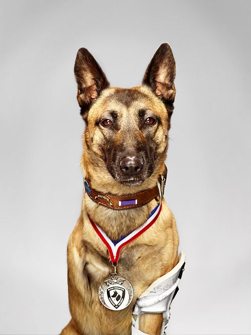 While serving in Afghanistan, U.S. military combat dog Layka was shot four times by the enemy at point-blank range. Despite her injuries, she still attacked and subdued the shooter, saving her handler and the other members of the team. Seven hours of surgery and the amputation of one leg saved her life. Her handler, Staff Sgt. Julian McDonald, fought hard to adopt her and she's now become a part of his family.