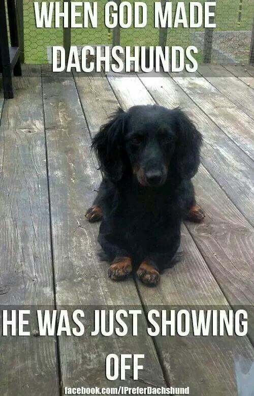 When God made Dachshunds, he was showing off!