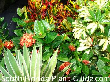 Best 25 Florida Landscaping Ideas On Pinterest White Rock Green Stone Names And Tropical Backyard