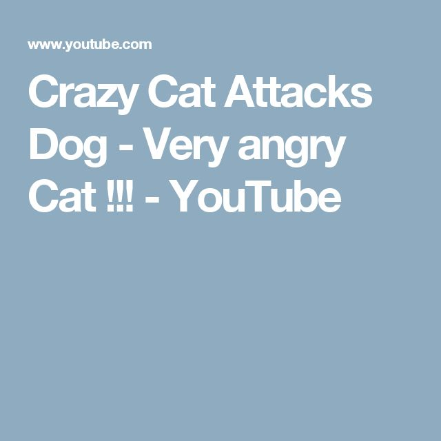 Crazy Cat Attacks Dog - Very angry Cat !!! - YouTube