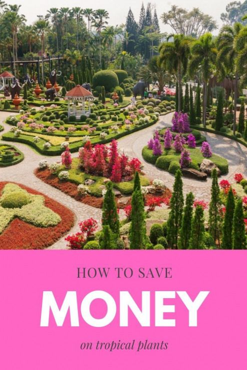 There are deals to be had when shopping for tropical plants. You just have to k… – Planting